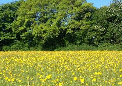 hale-farm-field
